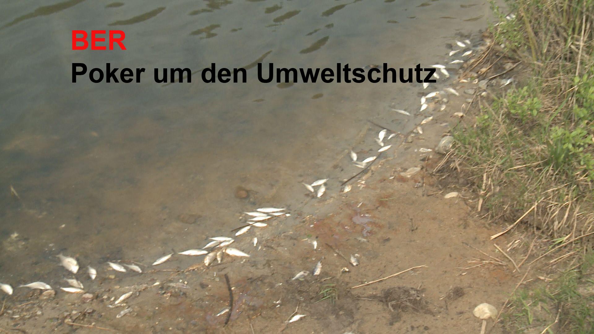 Ameisensäure im See, vor Fluglärm ungeschützte Bürger: Das haben wir mit der FBB und im Landtag erlebt. Diesen Beitrag hat BBB TV exklusiv. Sie sehen diese Fakten nirgendwo anders, denn […]